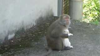 Monkey and a Kitten