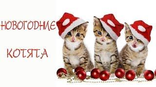 """Вышивка крестиком. Новогодние котята. Часть 1. СП """"100 дней до Нового года"""""""