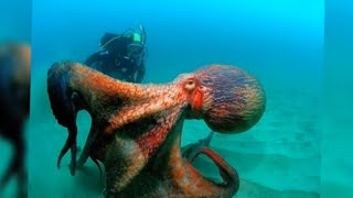 5 BIGGEST Sea Creatures In The World!