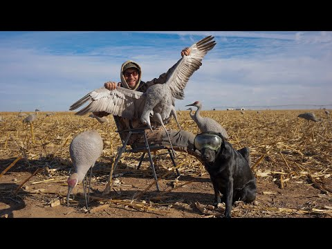 Hunting Giant Texas Sandhill Cranes!! (Catch Clean Cook)
