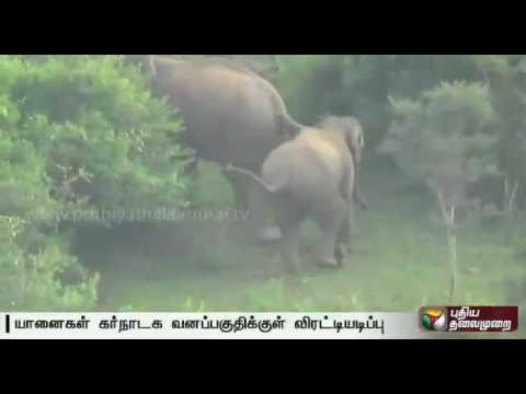 Forest officials chase away elephants to Karnataka forests in Krishnagiri