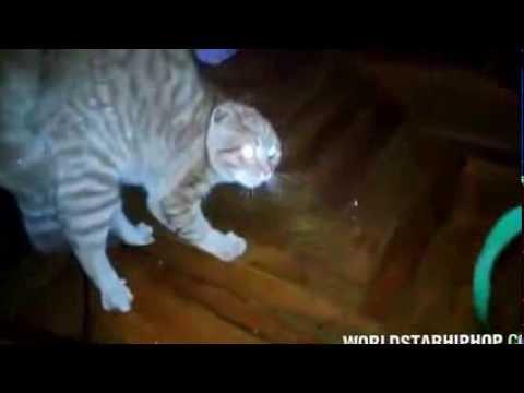 kitten heating pad