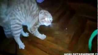 Scared Cat Saying No