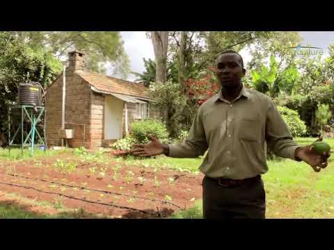 SunCulture - Kenya Part 1