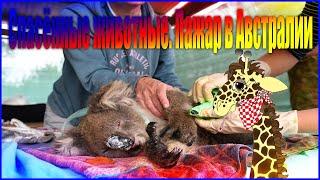 Спасенные животные Пожар в Австралии