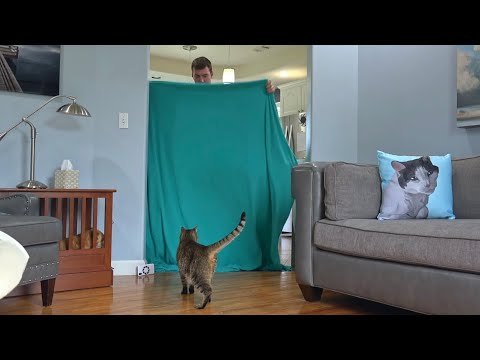 What The Fluff | Cat Reacting To Magic Trick With Blanket with Dog