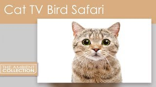 Cat DVD Bird Safari - Cat TV entertainment with Cute Animals