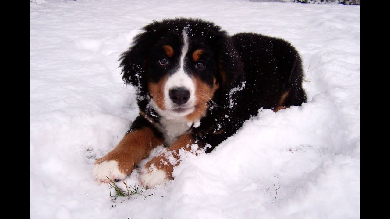 Image result for puppy in snow