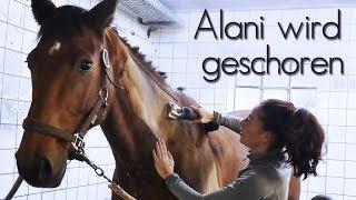 [HOW TO] Wir scheren Alani & Produkttest