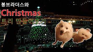 봉구&봉봉이와 크리스마스 준비하기~!!  #반려…