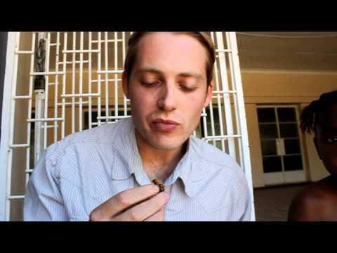 Eating a mopane worm