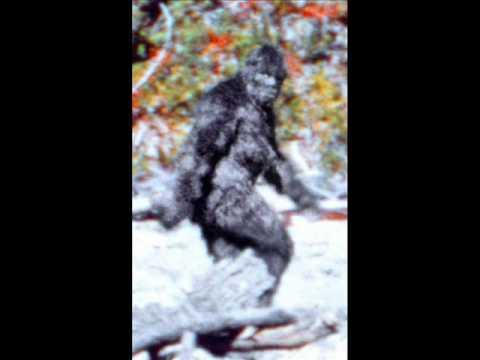 Buddy Knox Bigfoot Song