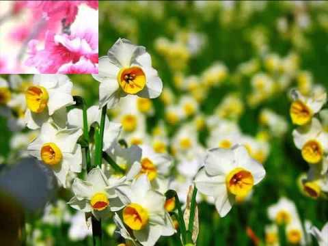 Музыка весенних цветов.