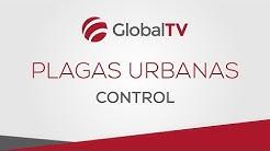 Control de plagas urbanas #GlobalTV