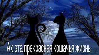 LPS mv - Ах, эта прекрасная кошачья жизнь [RUS]