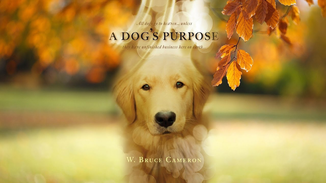 Dog S Purpose No Abuse