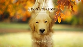 A DOG'S PURPOSE - ANIMAL ABUSE, HYPOCRISY AND COGNITIVE DISONANCE