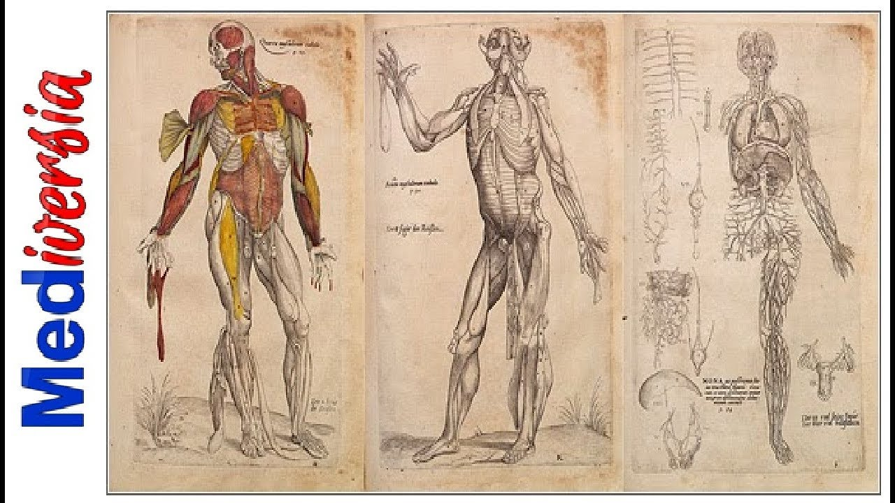 La anatomía humana ¡como nunca antes!   Andrés Vesalio - YouTube