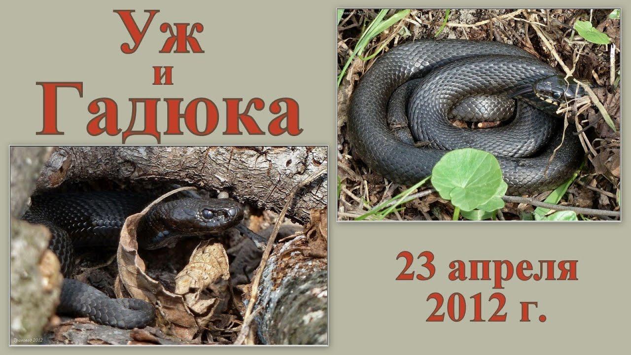 Змеи фото змей с описаниями Названия змей с фотографиями