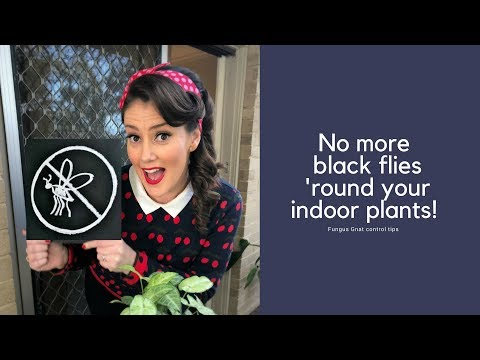 no-more-black-flies-'round-your-indoor-plants---fungus-gnat-control-tips-//-the-gardenettes
