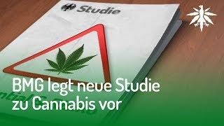 BMG legt neue Studie zu Cannabis vor | DHV News #147