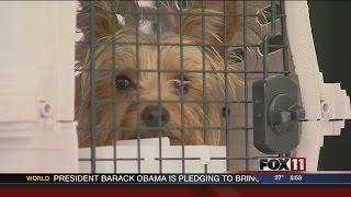 Arizona Dog Now Homeward Bound After Being Found In Wisconsin