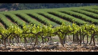 La Route des vins - Cote du Rhone