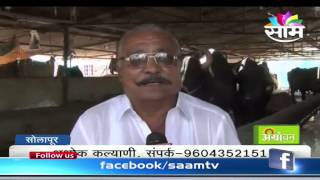 Ashok Kalyani's dairy farming and milk business success story
