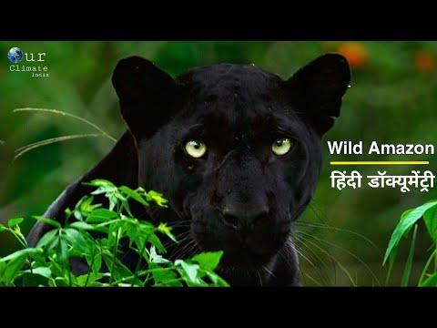 Download Wild Amazon Wildlife In Hindi | Full Episode | Hindi Language Documentary .