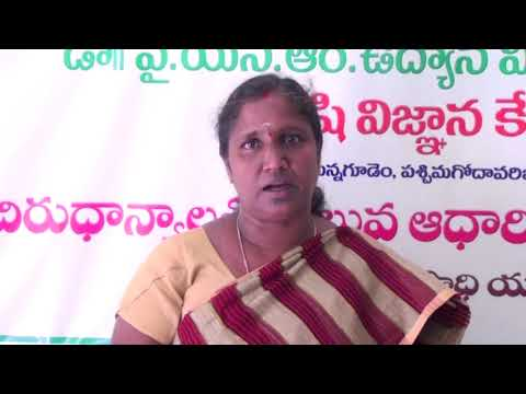pretty nice 60023 377b4 Millet Processing A success story of tribal women in West Godavari
