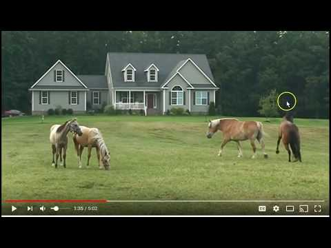 Some Really Good Horse Herd Behavior & Lessons