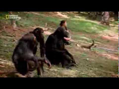National Geographic: Ape Man (sample)