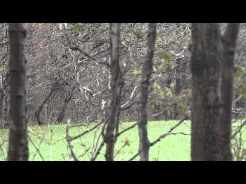 New York Turkey Hunt (Western New York)