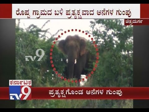 Two Elephants Spotted in Chitradurga Which Have Created Tense Moment in District