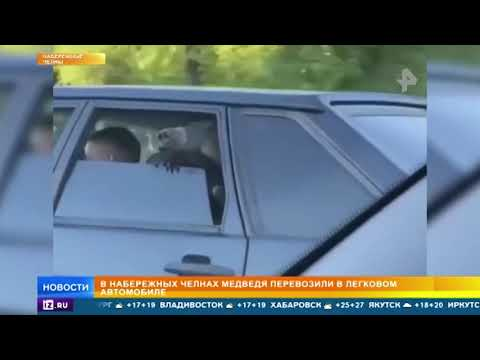 В Набережных Челнах медведя перевозили в легковом автомобиле