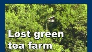 Lost Japan green tea farm ロスト日本緑茶農場 - Abandoned Japan 日本の廃墟