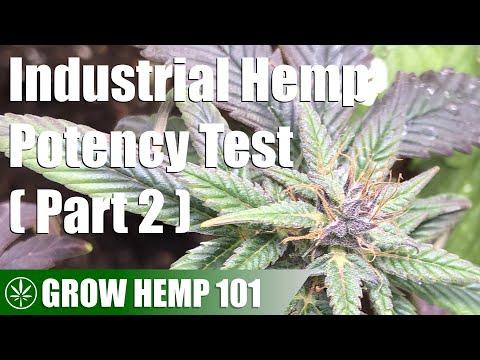 Industrial Hemp Potency Test Indoor Grow (Part 2)