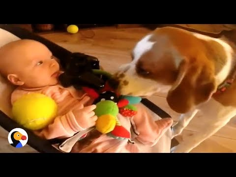 Guilty Dog Apologizes to Baby By Sharing His Toys | The Dodo
