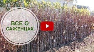 видео 8 лучших плодово-ягодные кустарника для сада на даче