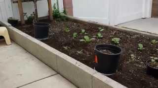 My Raised Bed Garden & Plants