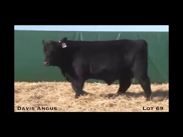 Davis Angus Lot 69