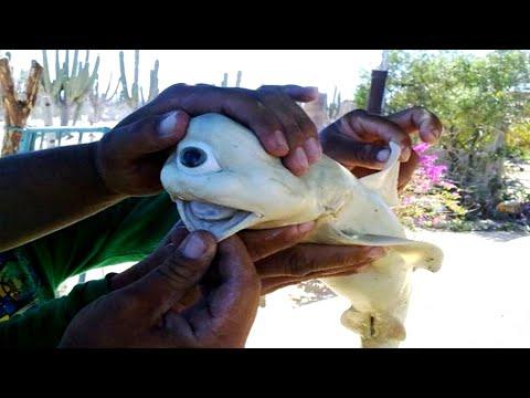 أغرب 6 مخلوقات عثر عليها الصيادين بالصدفة اثناء الصيد  - نشر قبل 2 ساعة