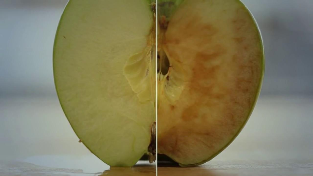 لماذا يتغير لون التفاح بعد تقطيعه Youtube