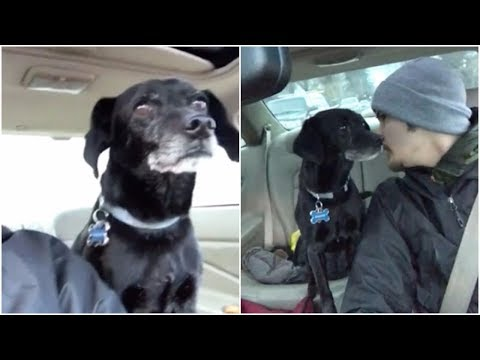 The delivery guy determined that  Rescuing  black dog life's  is more important than lost the job