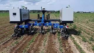 Plečkování kukuřice robotem - Dolní Újezd u Litomyšle (4. 6. 2020)