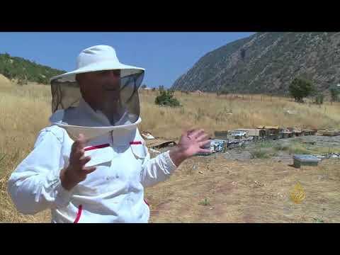 هذا الصباح- إنتاج العسل في كردستان العراق  - 13:21-2017 / 9 / 19
