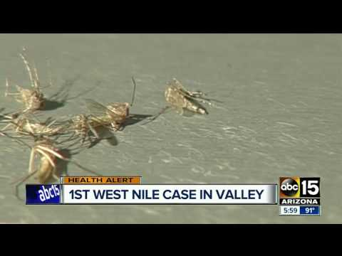 Maricopa County confirms first West Nile virus sample in northeast Mesa