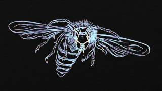 Soft the Brainstorm & Roggy Luciano - Il Calabrone (video)