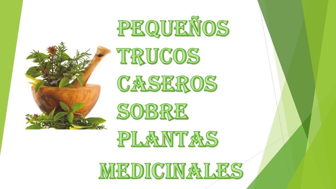 Plantas medicinales remedios naturales youtube for Para q sirven las plantas ornamentales