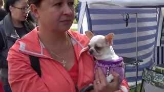 """Собачки (Dogs) - областная выставка собак """"Сумы-осень 2015"""""""